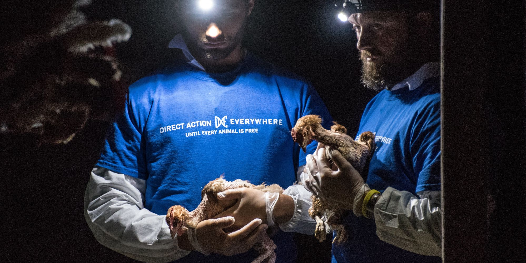 They Are Being Eaten Alive! What I Saw In A Cage-Free Egg Farm | Huffington Post