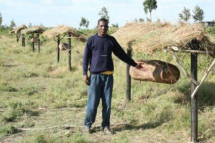 Honeybee loghives protecting Kenyan family crops.