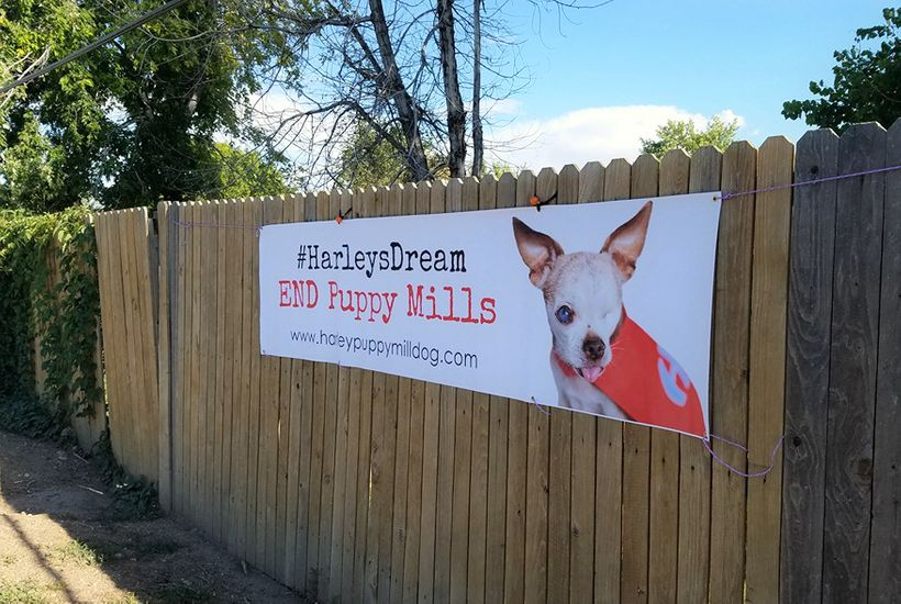 END Puppy Mills banner helps raise awareness about the cruel commercial dog breeding industry.