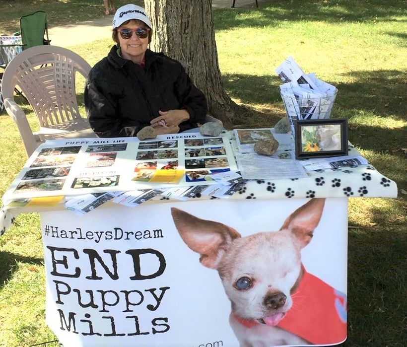 Carole Matthew is spreading the message about puppy mills.