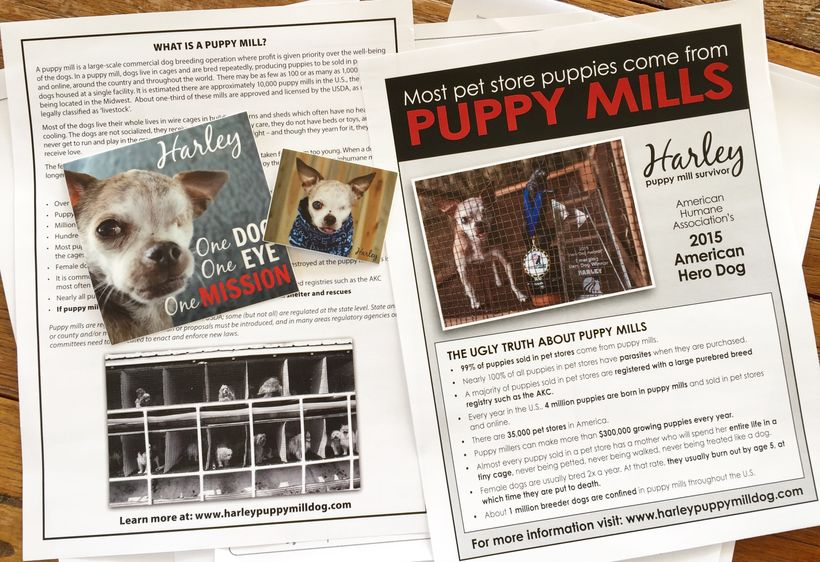 Anti-Puppy Mill flyers are available for distribution, just download and print.
