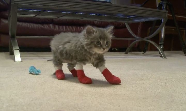 Pyro, one of two kittens that were rescued from a fire in North Dakota, is on the mend.