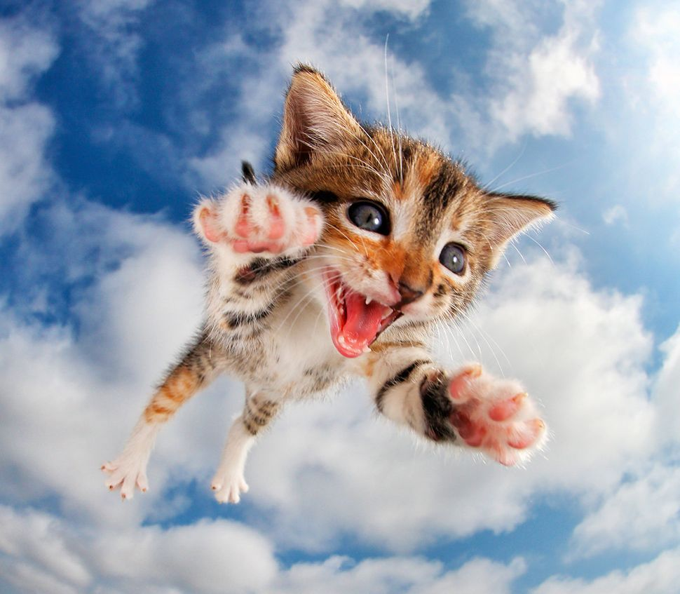 These s Flying Kittens Are What You Need Right Now