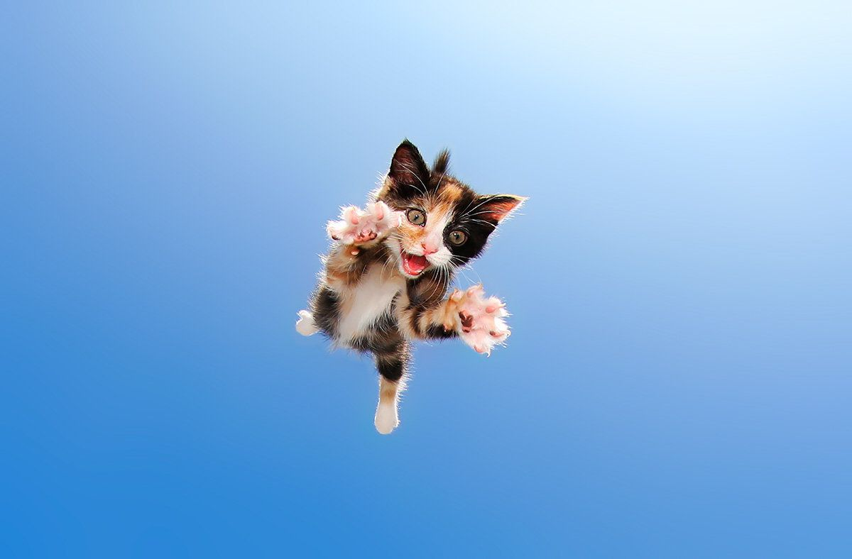 these photos of flying kittens are what you need right now