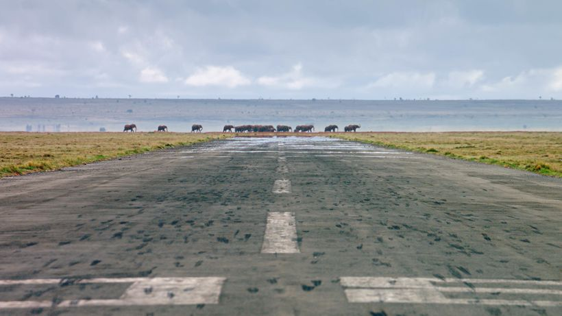 Living In The Age of Airplanes - A herd of African elephants walk the landscape at the end of a runway in Kenya