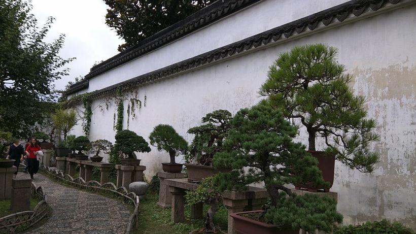 Bonsai in the Humble Administrator's Garden