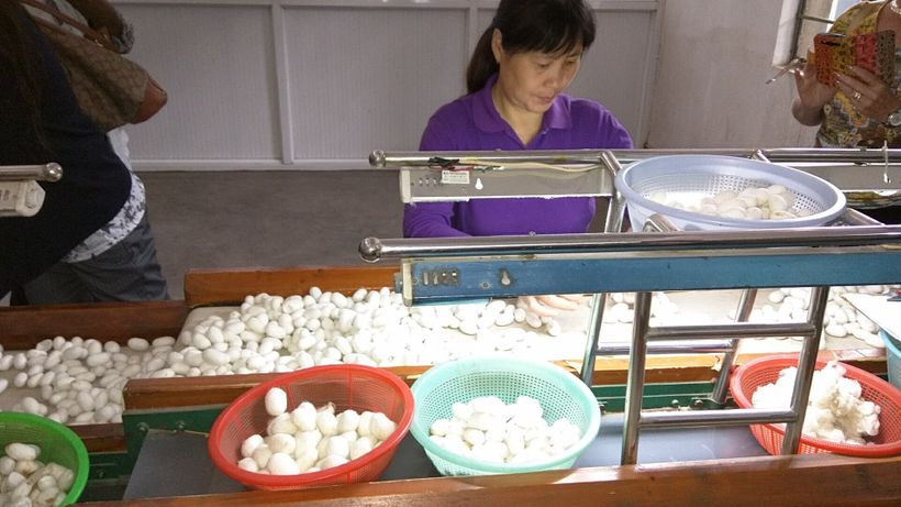 Workers sort the cocoons by size