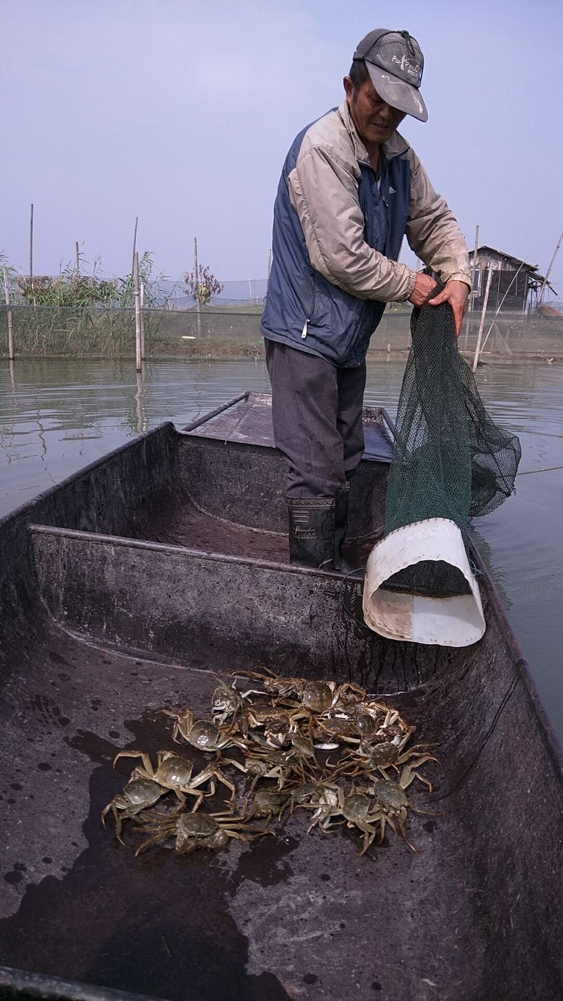 The fisherman pulls in the net of crabs