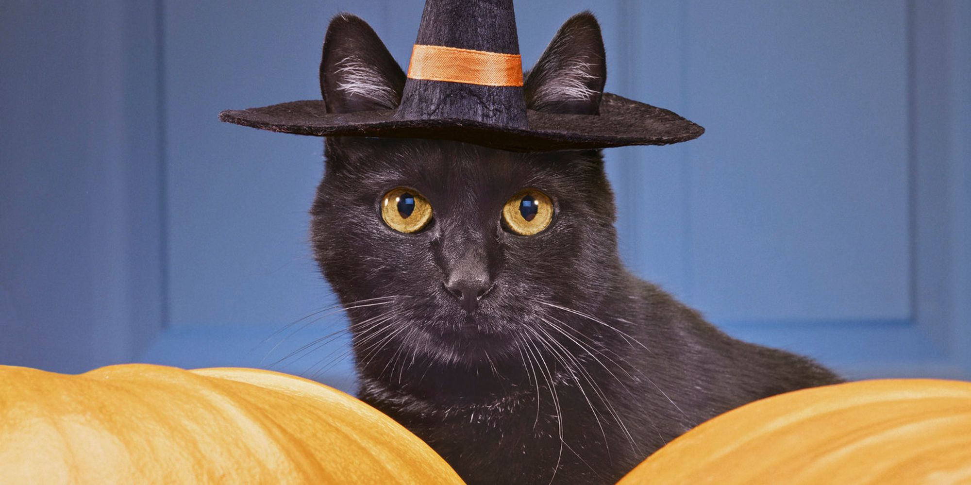 Why do we celebrate halloween the quiz that tests how for Why do we celebrate halloween in america