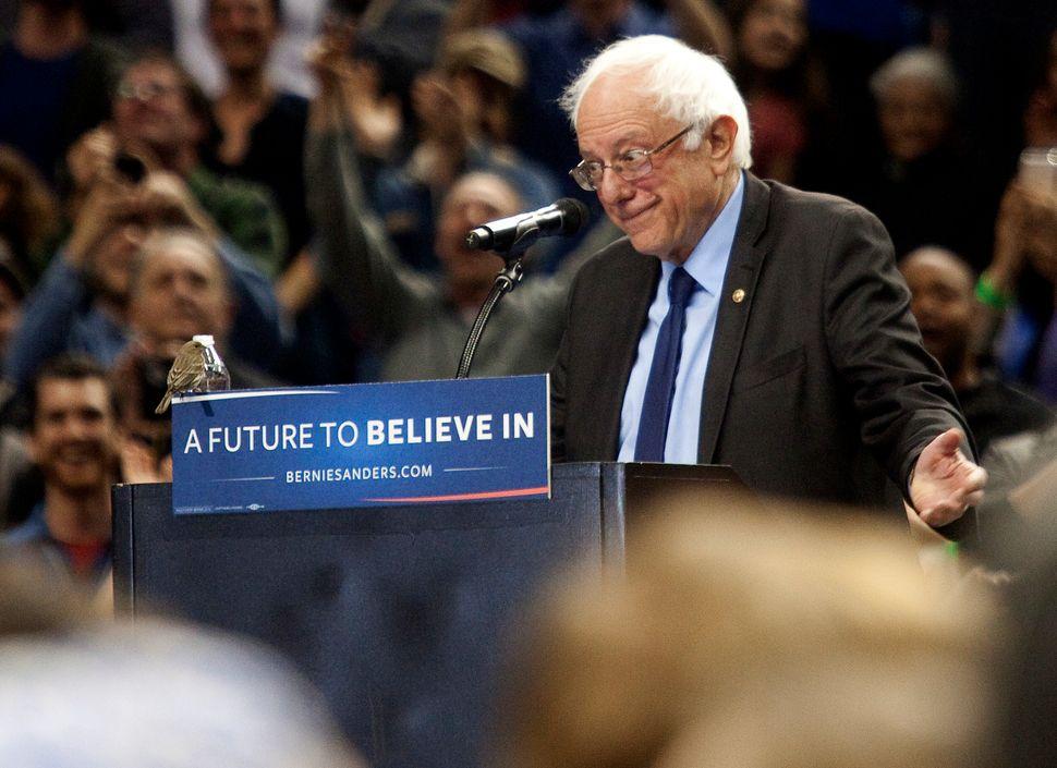 A small bird lands on Democratic presidential candidate Bernie Sanders' lecternas he speaks on March 25, 2016, in Portl
