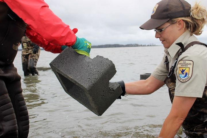 USFWS staff and partners help build a living shoreline at Chincoteague National Wildlife Refuge. The project is supported by federal funding for Hurricane Sandy recovery.