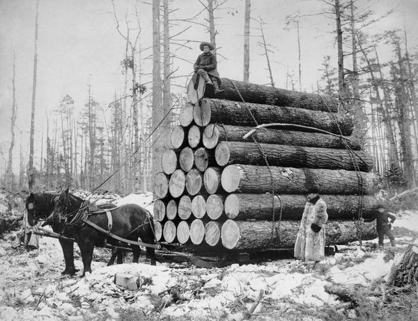 Load of logs being pulled by two horses in winter, circa 1908.