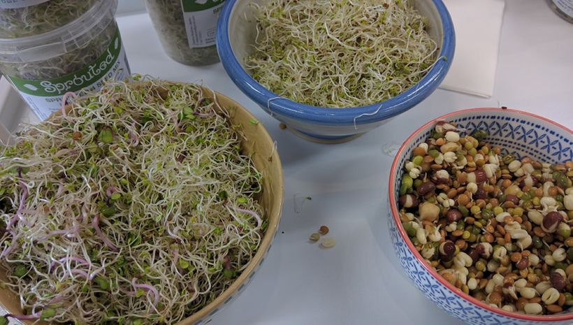 Fresh bean sprouts are full of nutrients
