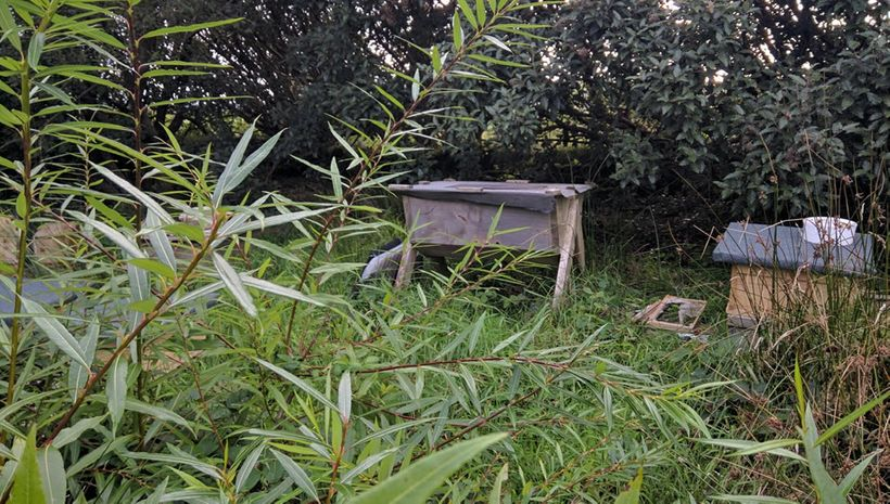 Trevor's hives are kept in a meadow near the house