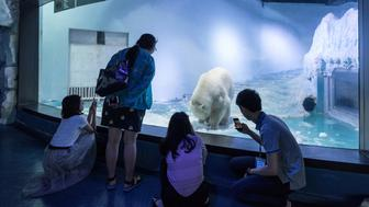 GUANGZHOU, CHINA - JULY 27: Tourists look at polar bear 'Pizza' at an aquarium in Grandview shopping mall on July 27, 2016 in Guangzhou, China. 'Pizza' is the only live polar bear in south China's Guangzhou.  (Photo by VCG/VCG via Getty Images)