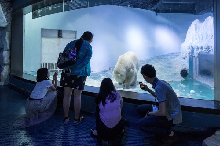 Tourists look at Pizza the polar bear, who resides inside this aquarium at a mall in Guangzhou, China.