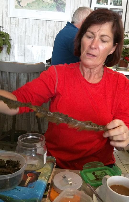 Maria Kennedy introduces us to sea vegetables
