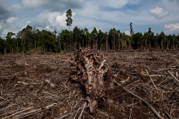 Rampant deforestation in parts of the world has spurred habitat loss for vulnerable wildlife populations, the WWF warns.