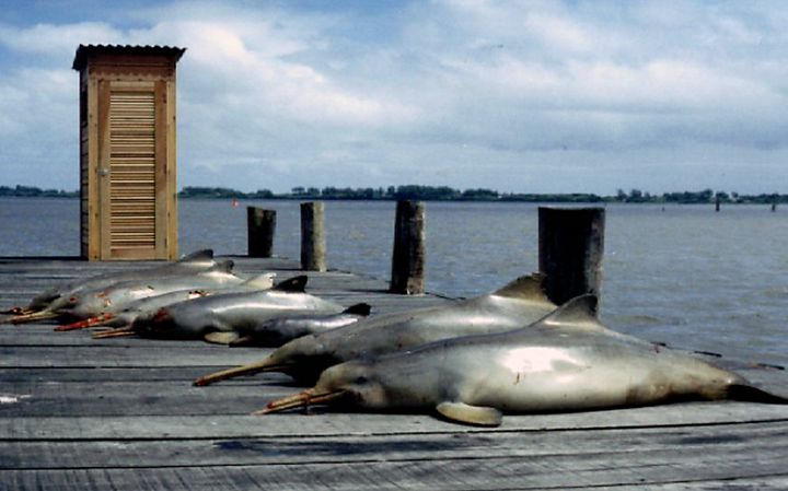 Wildlife, including dolphins, are often the byproduct of a food system focused only on production, the WWF warns.