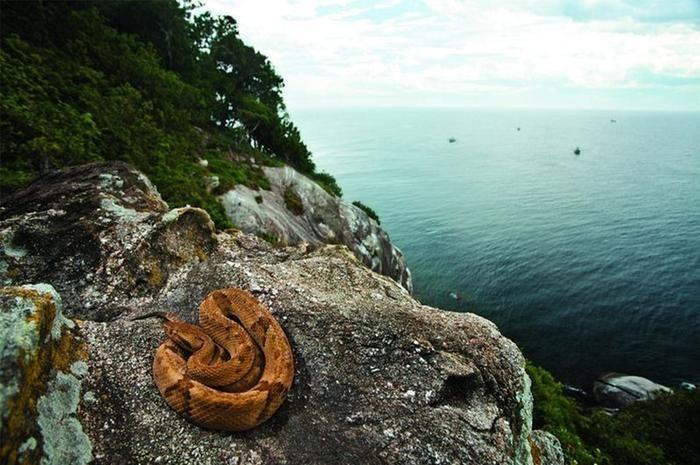 <p> <strong>Ilha da Queimada, Brazil</strong> </p>