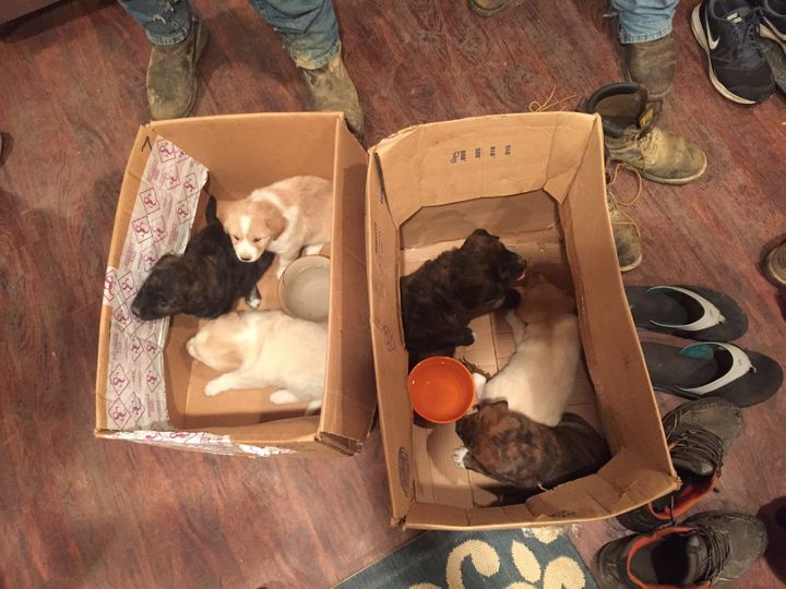 Pups found in the forest during a bachelor party were adopted by the groom, groomsmen and their relatives.