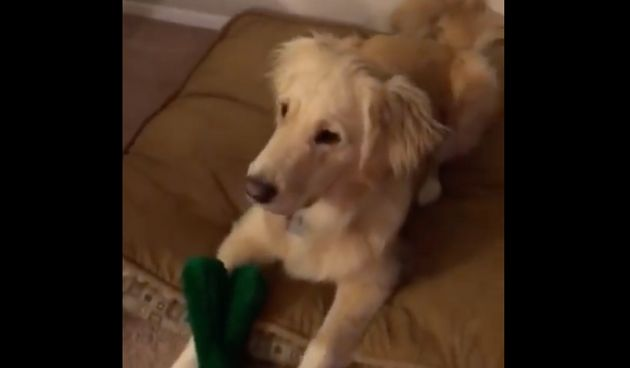 This Dog's Reaction To Her Gumby Toy Coming To Life Is All You've Ever