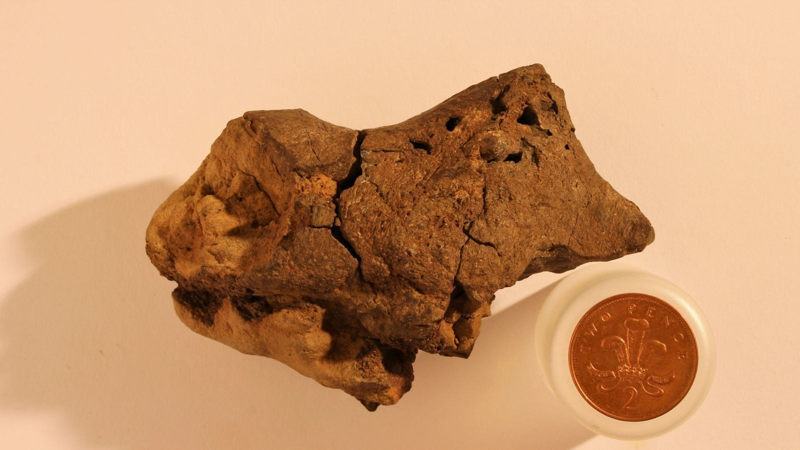 A fossilized dinosaur brain, easily mistakable for a rock.