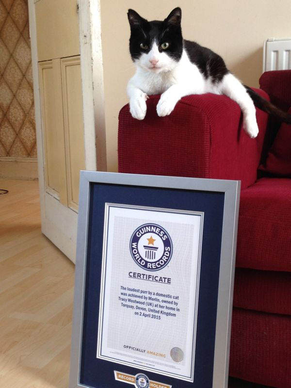 Merlin, a rescue kitty from Devon, U.K., has plenty to make a noise about: He owns the Guinness World Records title for <a hr