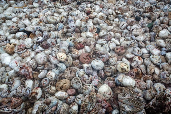 Photographer Paul Hilton captured this photograph last year of thousands of frozen pangolins that had been seized from a seaf