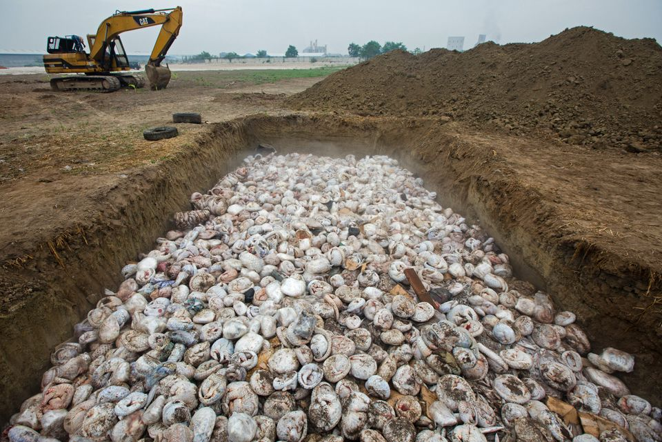 The frozen bodies of 3,000 to 4,000 pangolins lying in a pit before being burned in Medan, Indonesia.