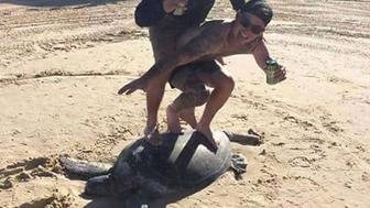 An image from Facebook uploaded by Ricky Rogers appearing to show people standing on a tortoise