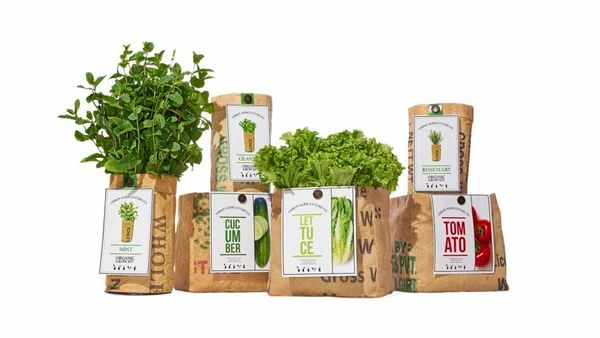 """<strong>It&rsquo;s Easy Being Green</strong> <br><br>""""I absolutely love cooking with fresh produce from my garden, and these"""