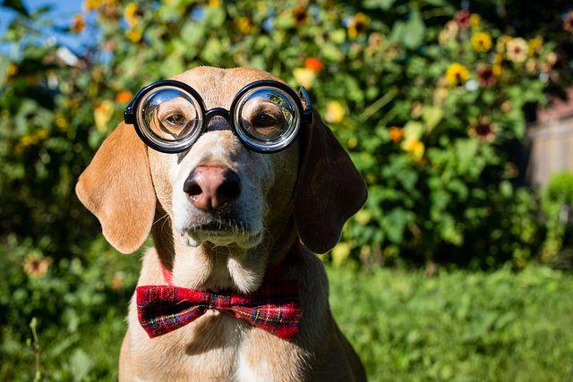 "<a href=""https://flic.kr/p/fMLR8Y"" target=""_blank"">Got a new bowtie!</a> By TheGiantVermin via Flickr"