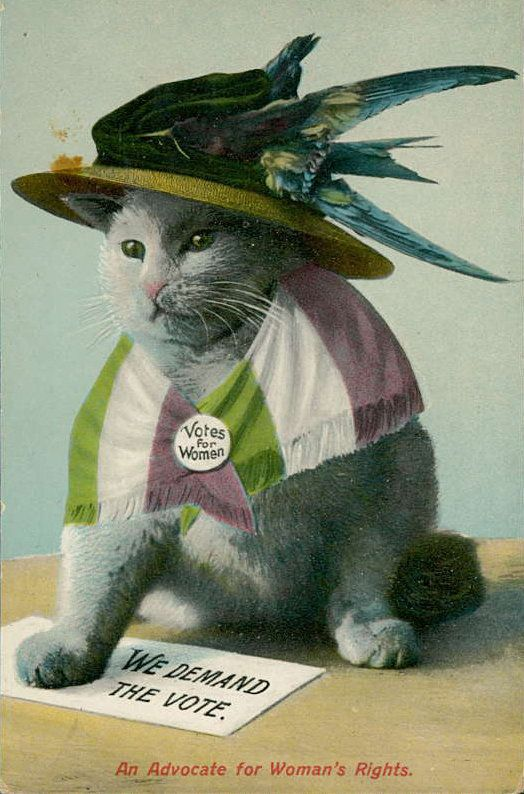 The Bizarre History Of Anti-Suffrage Cat