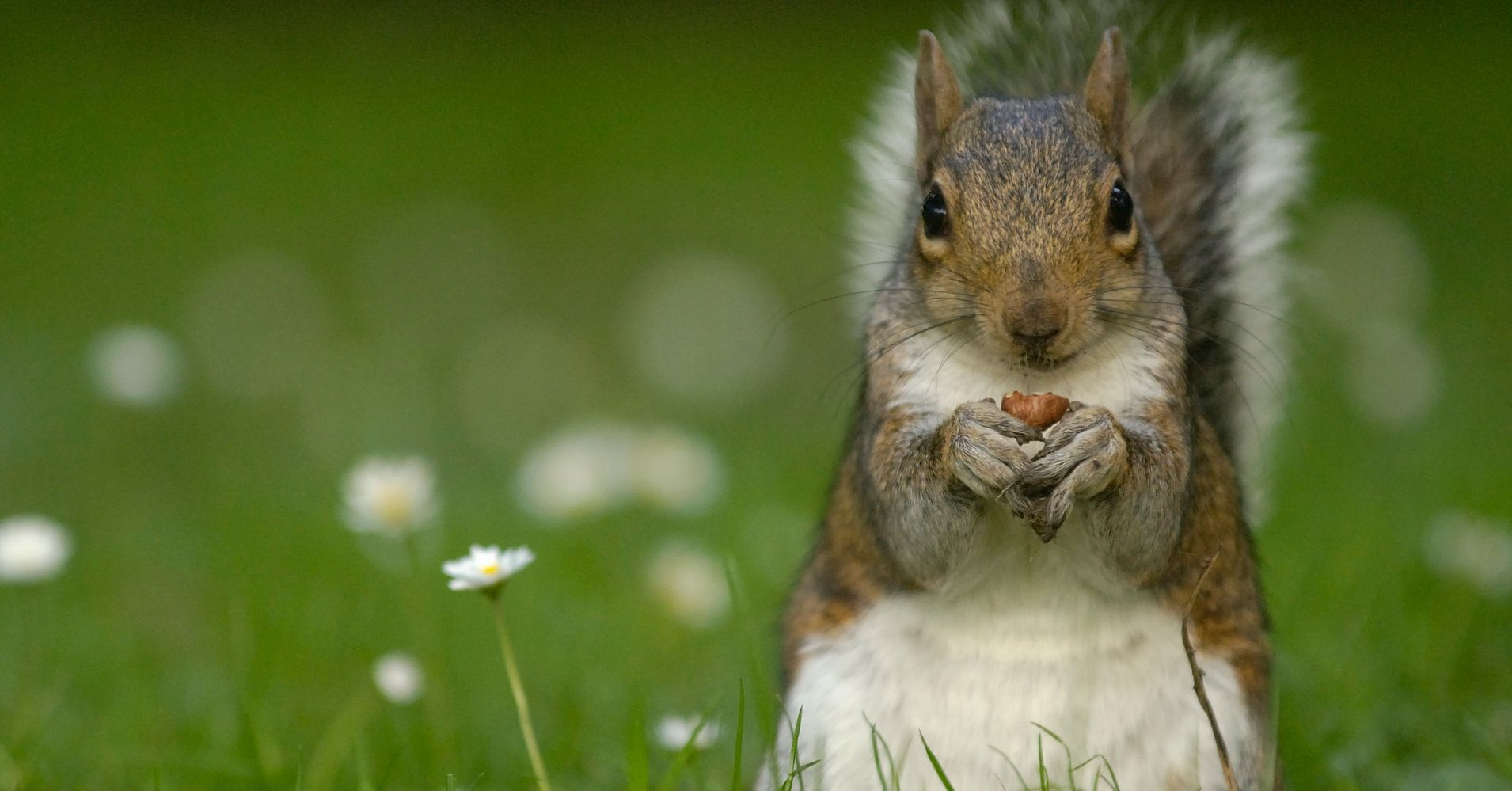 squirrel injures several people in angry rampage at florida senior