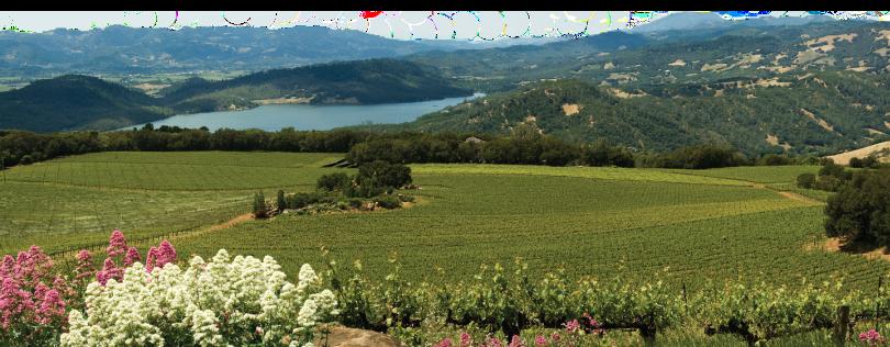 Chappellet vineyard view.