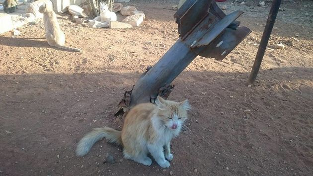 Cats in War-Torn Aleppo