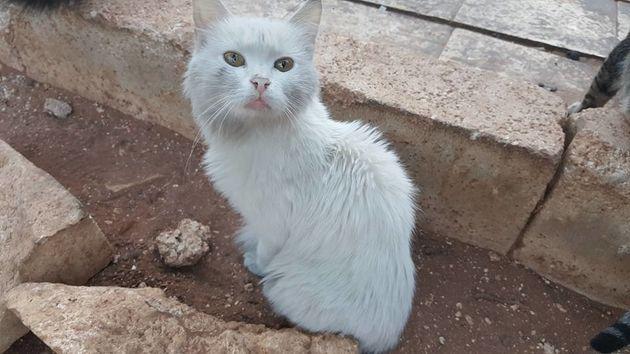 アレッポの「猫の避難所」、空爆で被害を受ける