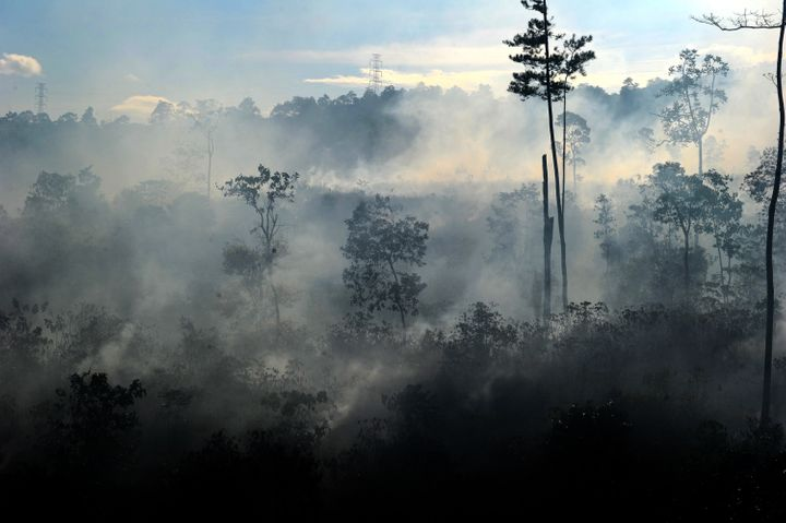 A rapid loss of forests -- including those in Indonesia, cleared for palm oil plantations -- will likely be discussed at the