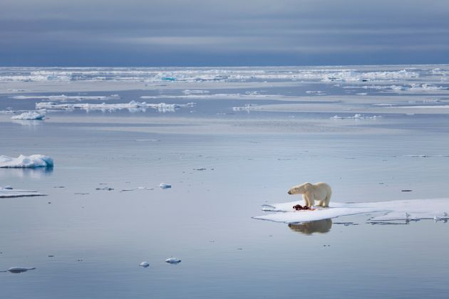 Observed Arctic sea-ice loss directly follows anthropogenic Carbon dioxide emission?