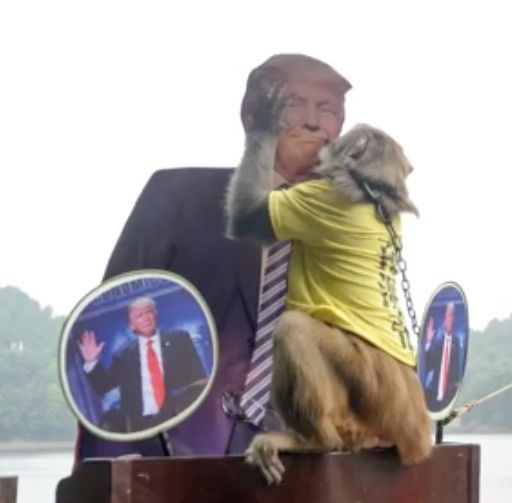An allegedly psychic monkey in China predicts Donald Trump will win the Nov 8 presidential election