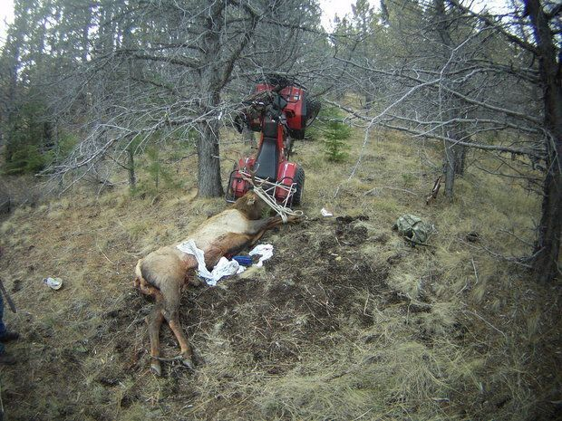 An Oregon man was seriously injured Saturday when he impaled himself on the antler of an elk he'd just killed.