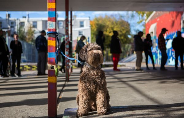 A dog waits outside of a polling place for its owner to vote on Nov. 8, 2016, in Philadelphia.