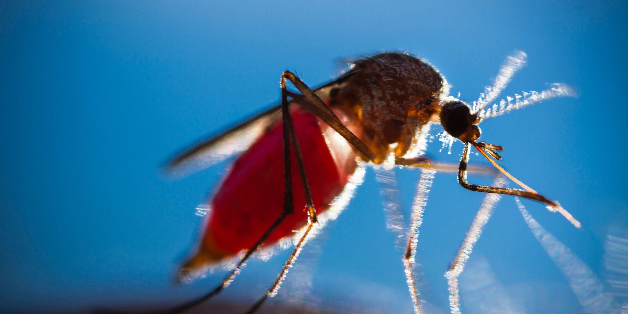 The Strange Reason Women Get Chikungunya More Than Men