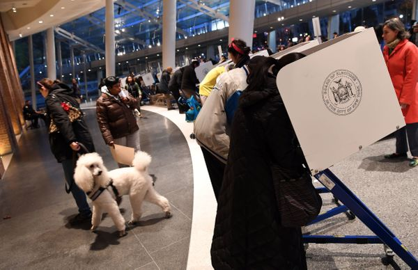 A dog walks by people voting at the Brooklyn Museum polling station in the Brooklyn borough of New York City.