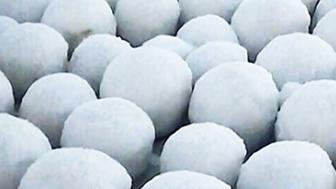 A small group of thousands of snowballs found on a beach near the village of Nyda in northwest Siberia