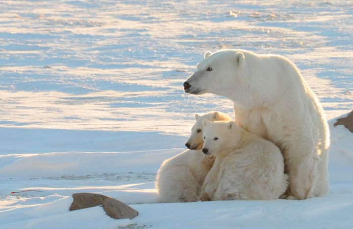 It's not just polar bears that are being affected by climate change.