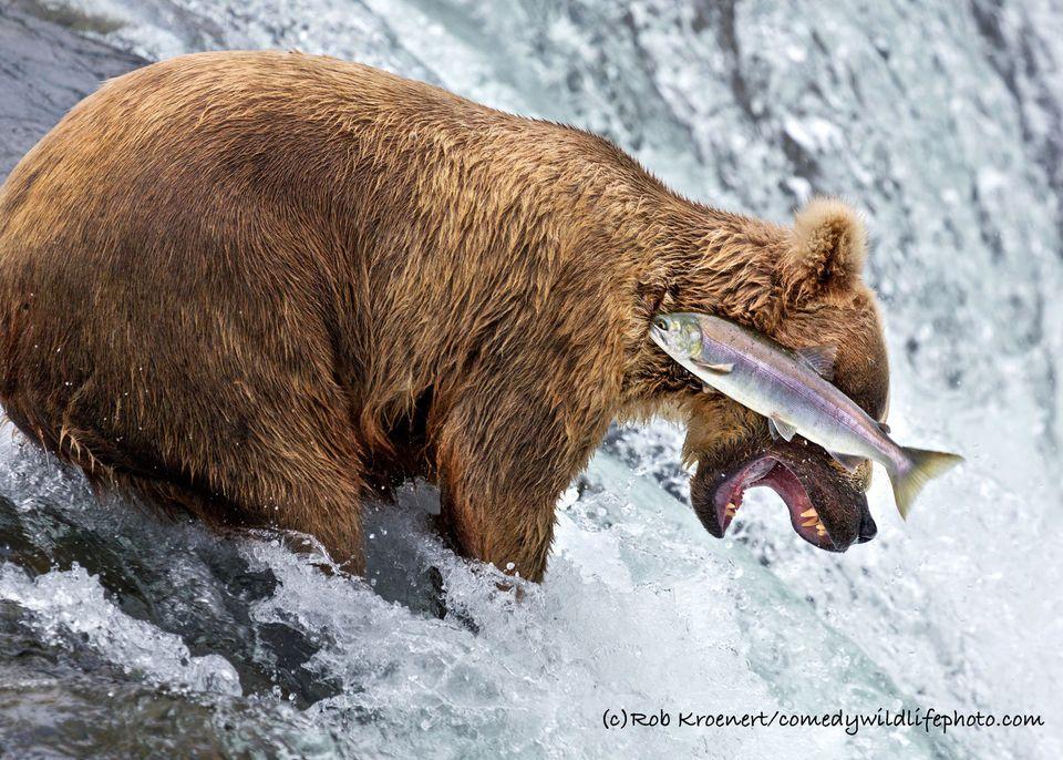 真剣だけど、どこかおかしい 野生動物のユニークな写真