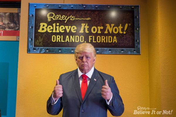 One of the Trump dummies is temporarily on display at the Ripley's Odditorium in Orlando, Florida. But not for long.