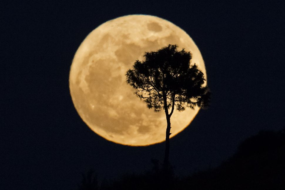 "A tree is silhouetted as a ""supermoon"" rises on Monday over Heho, Myanmar's Shan state."